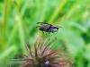 Fliege in der Trocknungsphase - neu entstandenes Leben