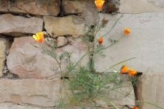 Gartenmauer als Kleinbiotop