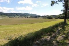 Glatthaferwiese