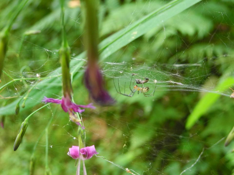 sepweb-dscn6700