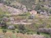 Oliven und Mandeln