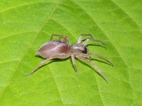 Spinne - Foto: © Clemens M. Brandstetter