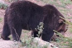 Der Bär ist los...