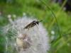 Mottakopf-Wanderung: Wespe