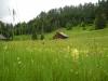 Mottakopf-Wanderung: Almwiese - Vilschena