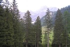 Fichtenwälder