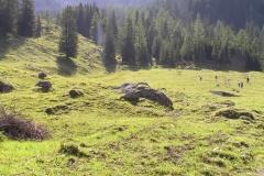 Weiden und Wald