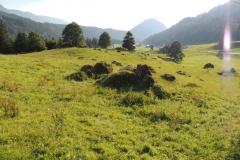 """Sippersegg: die """"Grüne Wüste"""" wird durch Rumex aufgelockert"""