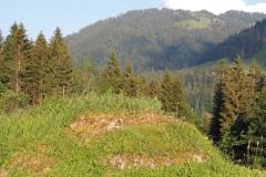 Sippersegg: die Felsen werden von der bestehenden Vegetation überwuchert